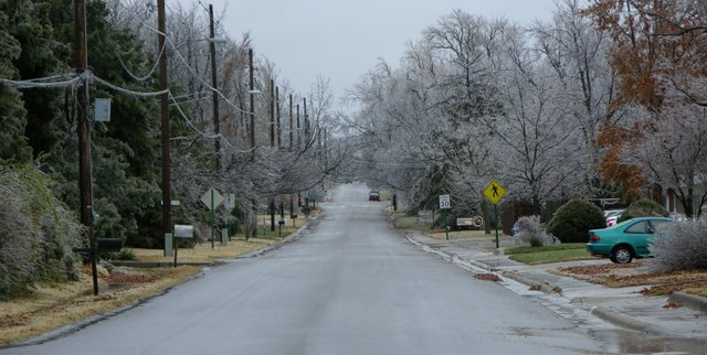 Icy trees on my street in North Newton