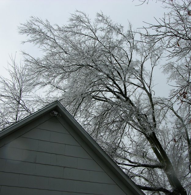 Icy tree looming over garage