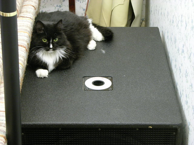 Cat laying on Yamaha SW1181VS subwoofer