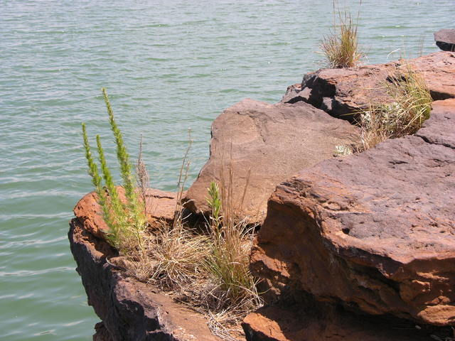 Wilson Lake, KS: rocks, flora, and water
