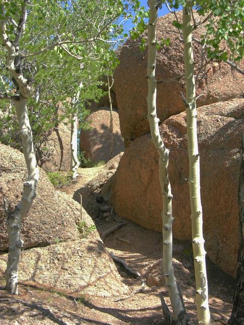 Trail near the top of Raspberry Mountain, Colorado