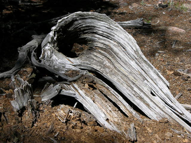 Weathered log on Raspberry Mountain, Colorado