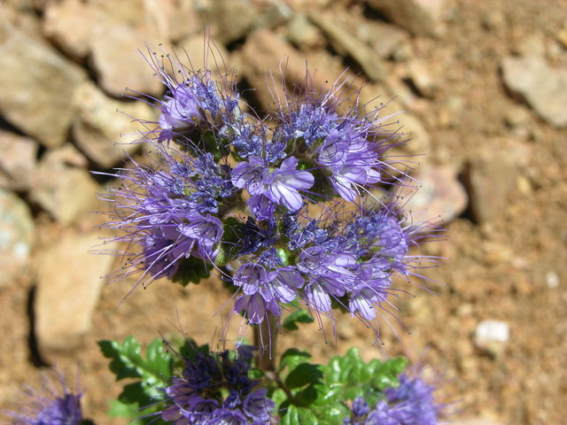 Rocky Mountain Mennonite Camp, Colorado: purple flower