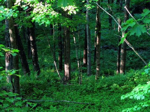 Woods on Allegheny Passage near Meyersdale, Pennsylvania